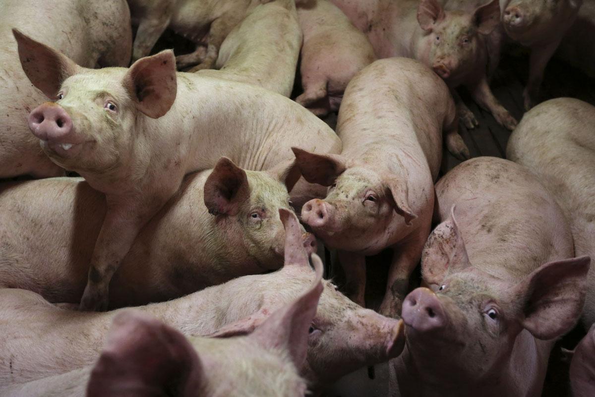 España no será auditada por la comisión de Bienestar Animal de la Unión Europea
