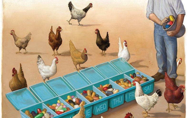 Big Chicken o cómo la apetencia de carne barata pone en peligro nuestra existencia