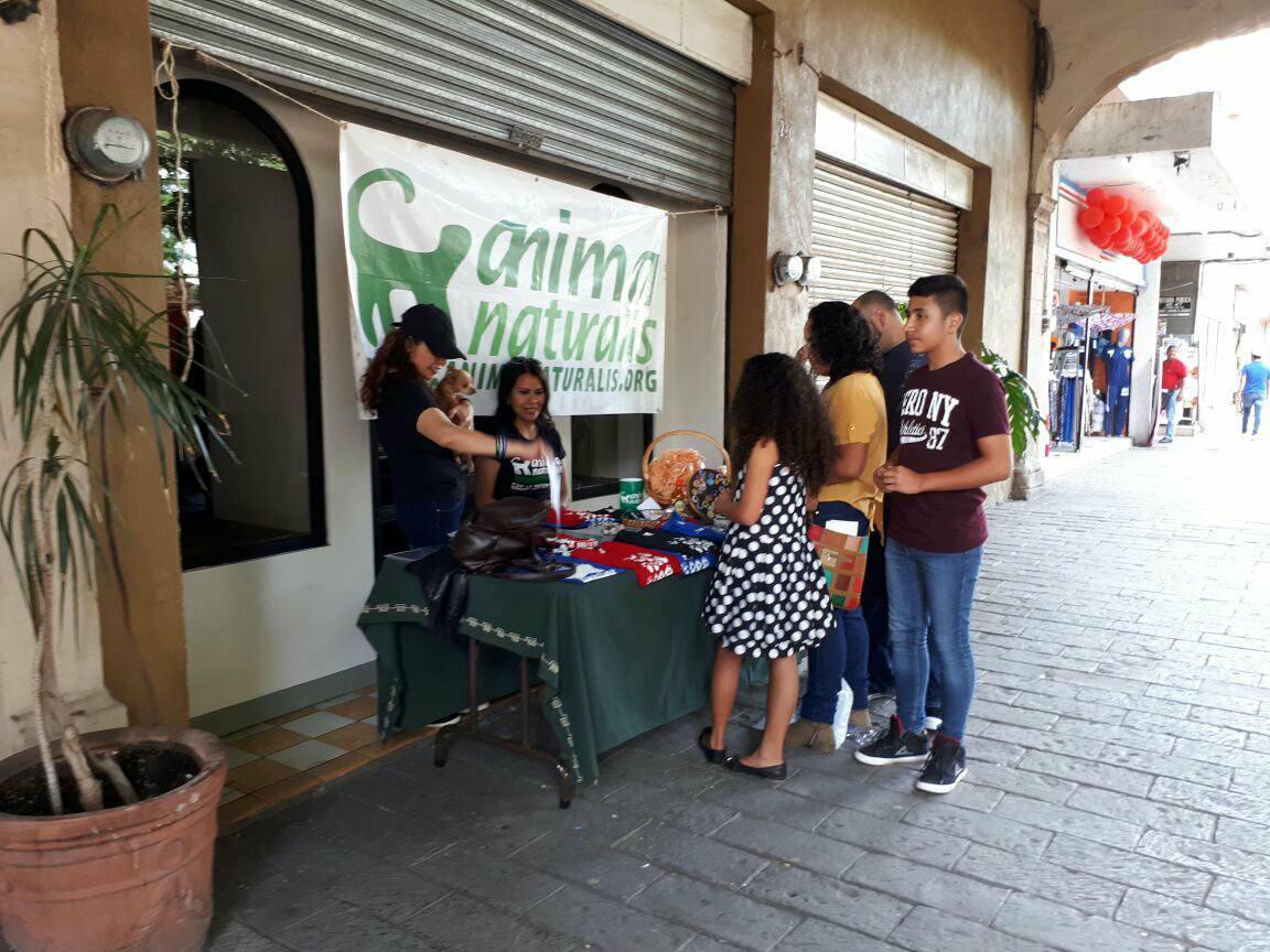 AnimaNaturalis realiza campaña de esterilización en Michoacán