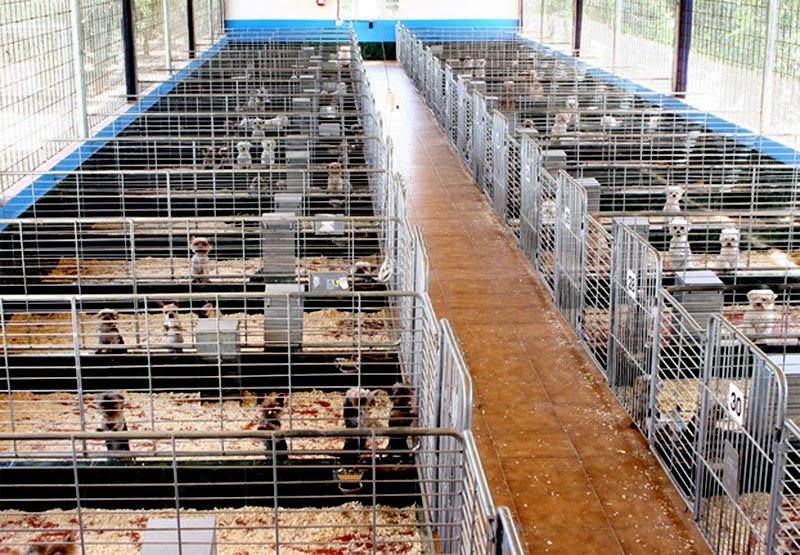 Las tiendas que venden animales viven sus últimas horas