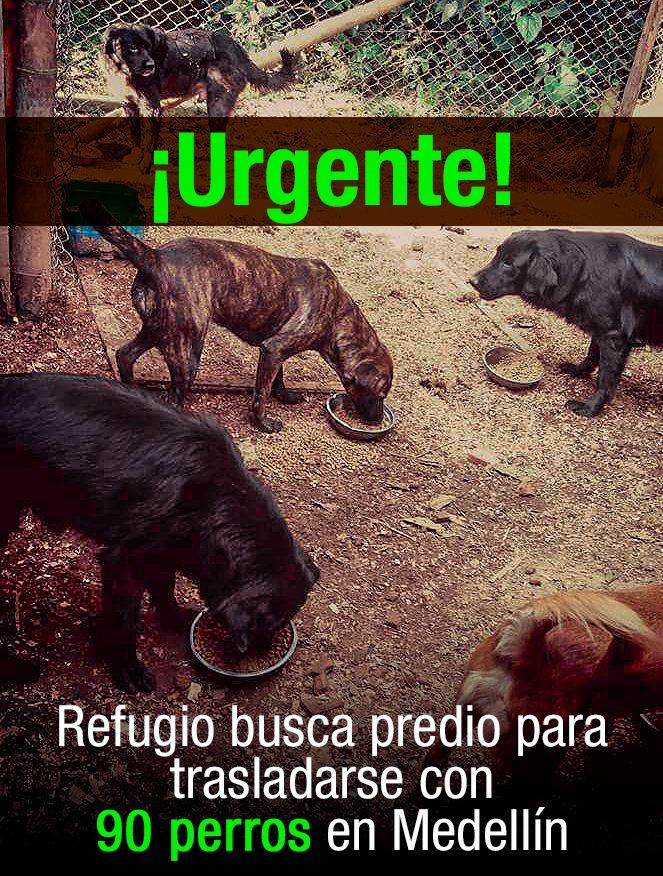 ¡Urgente! Refugio Corpanimales busca predio para trasladarse con 90 perros en Medellín