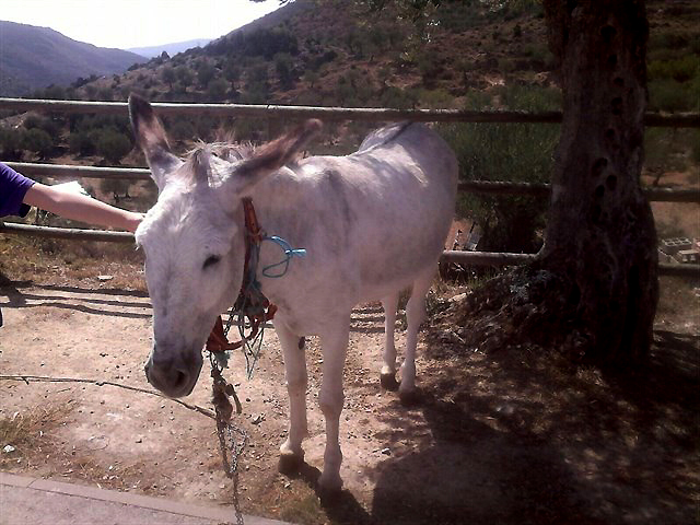AnimaNaturalis desvela nuevo caso de maltrato y tortura a un burro en Arnedillo