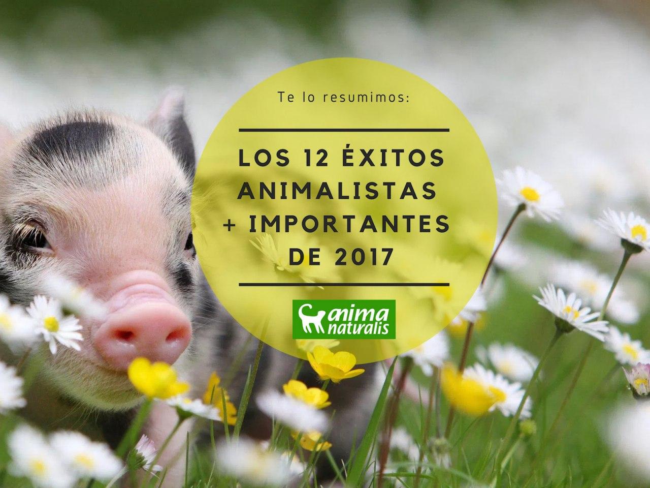 12 éxitos animalistas más importantes de 2017