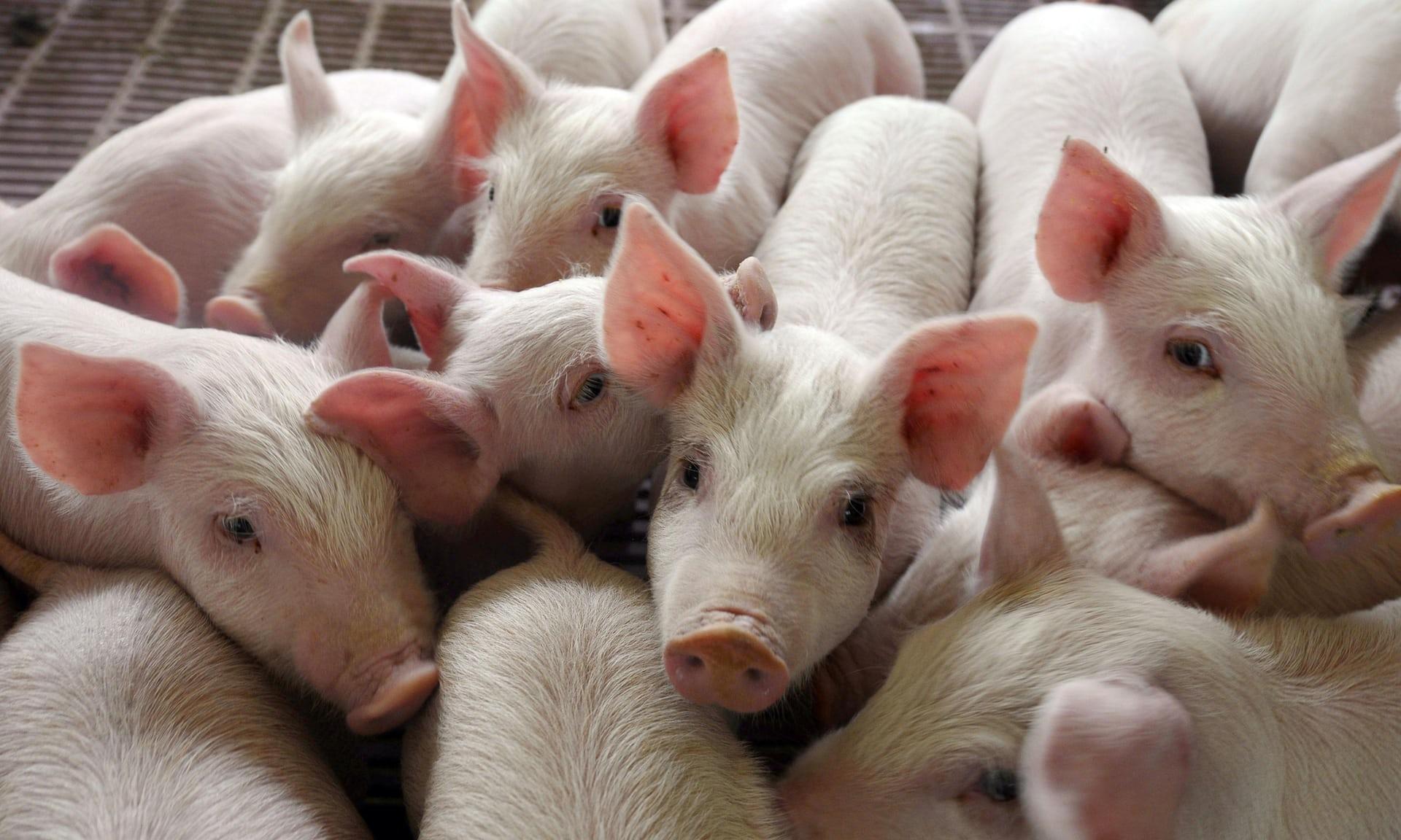 Expertos piden a los gobiernos un impuesto a la carne