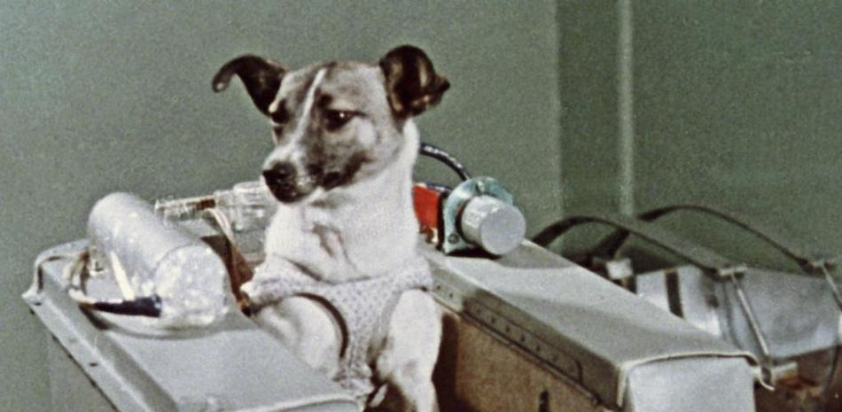 60 años después: que descanses en paz, Laika
