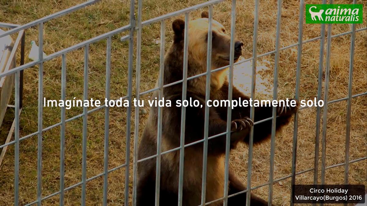 AnimaNaturalis expone la triste vida de los animales que aún existen en los circos españoles