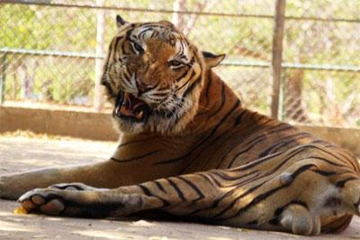 AnimaNaturalis y Fundación Azul Ambientalistas proponen proyecto para ayudar a los animales del Zoo del Zulia