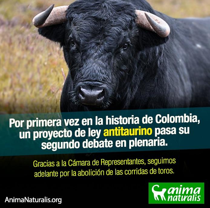 Cámara de Representantes colombiana aprueba Proyecto de Ley Antitaurino