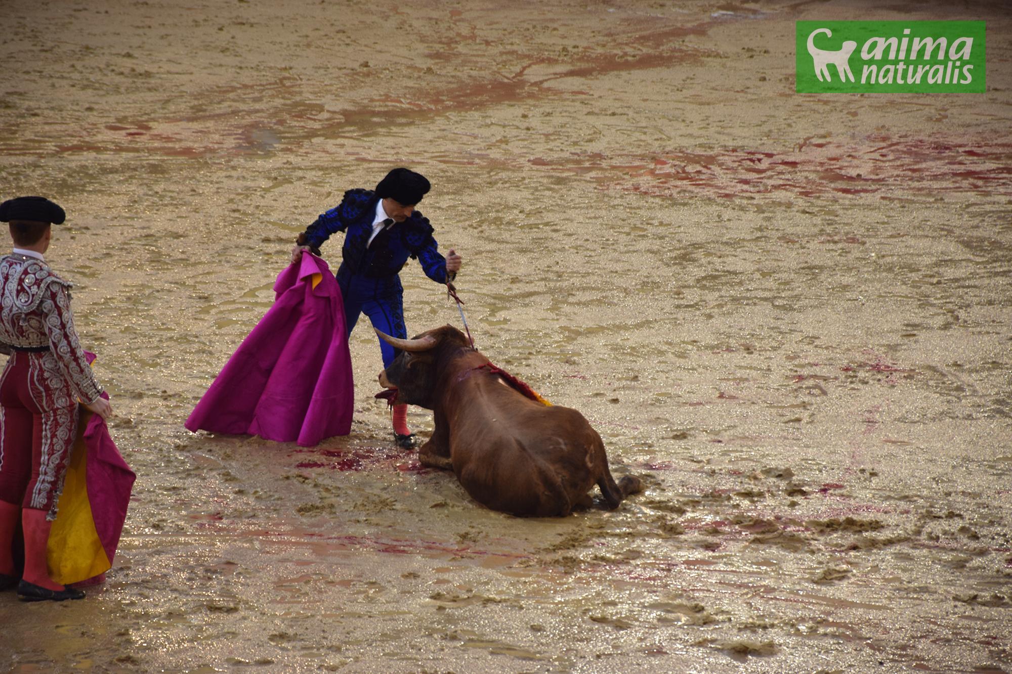 Valencia se inunda de sangre