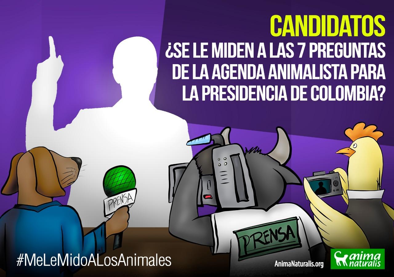 Candidatos, ¿se le miden a las 7 preguntas de la agenda animalista para la Presidencia de Colombia?
