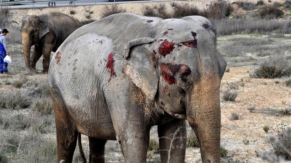 Van 350.000 firmas para prohibir los circos con animales en la Unión Europea