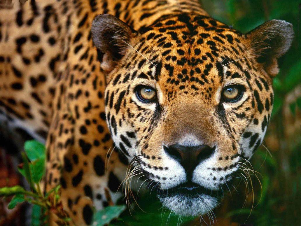 Costa Rica se convierte en el primer país en prohibir la caza deportiva