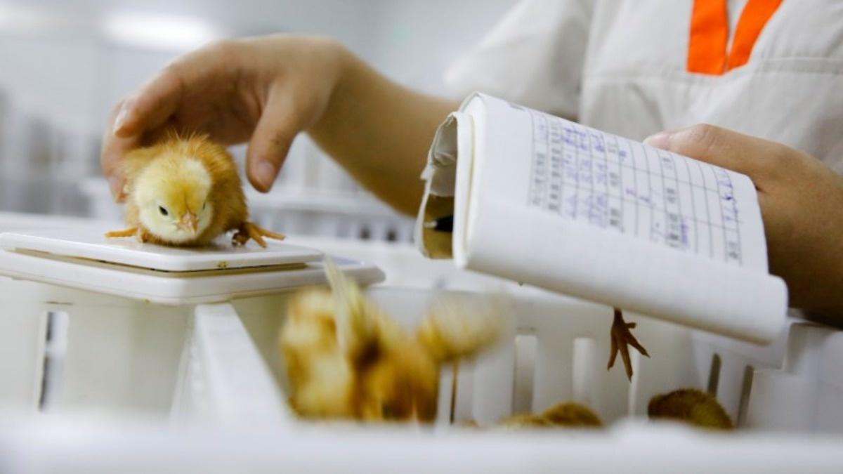 China produce más de mil millones de huevos al día