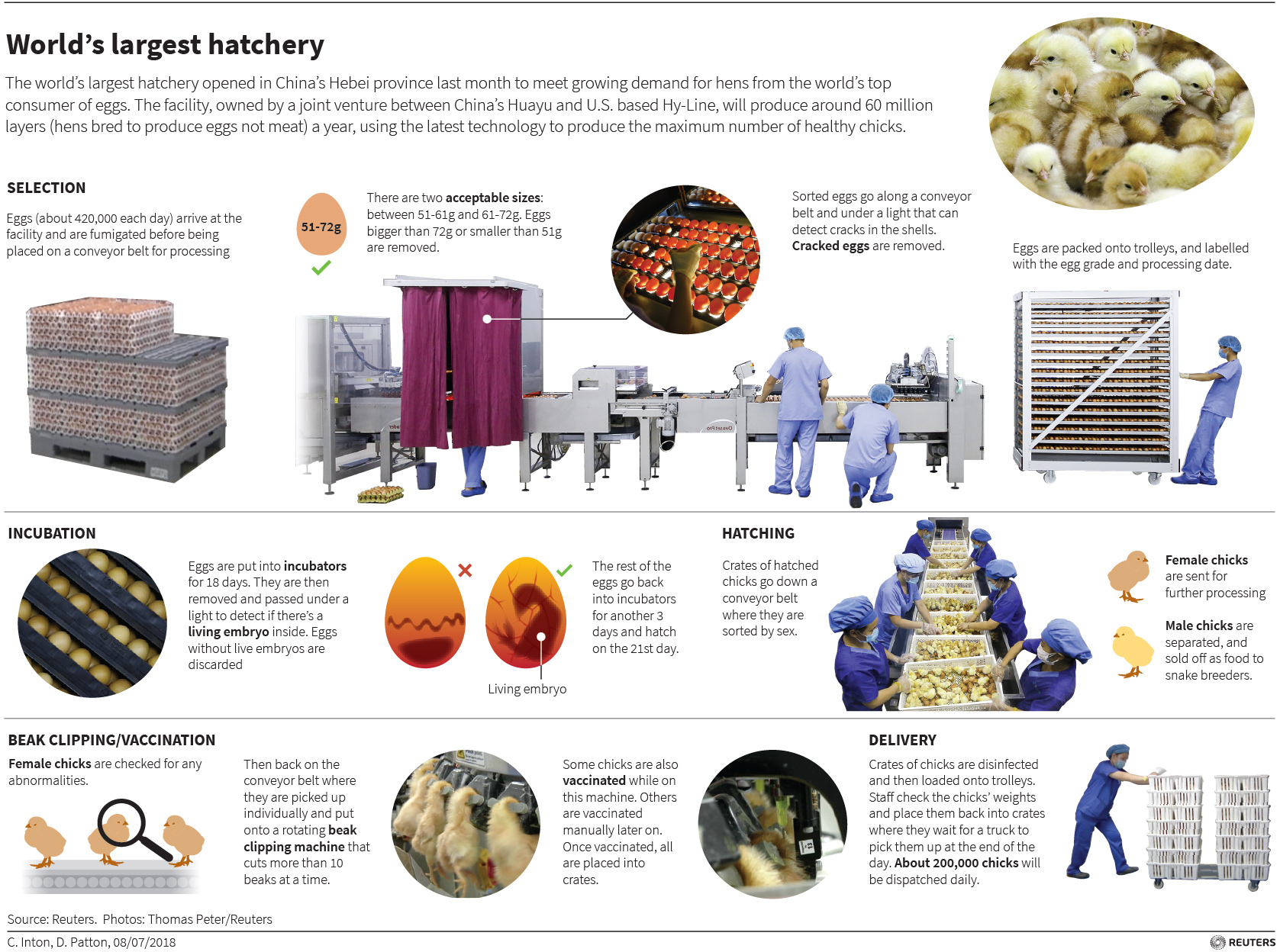 http://images.animanaturalis.org/posts/full/201808/P02-38475.jpg
