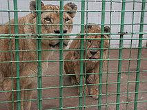 España podría ser primer país UE sancionado por no cumplir ley de Zoos
