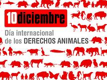 10 de diciembre: Día Internacional de los Derechos Animales 2008