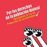 Por la Ley de Protección Animal en Venezuela