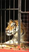 Bolivia: primer pais en Sudamérica en prohibir los Circos Con Animales