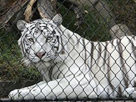 El maltrato de animales en los circos, está llegando a niveles alarmantes