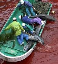 Primera ola de objeciones a la matanza de delfines en Taiji (Japón)