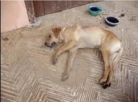Asesinato masivo de perros en El Carmen de Viboral, Antioquia. ¡ACTÚA YA!