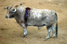 ¿Dará Montilla la estocada a los toros?