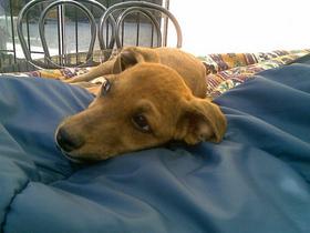 ¡Envía tu carta! Parlamento chileno condena a muerte a perros sin hogar