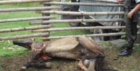 ¡Envía tu carta! Un caballo fue quemado vivo en Santiago de Cali