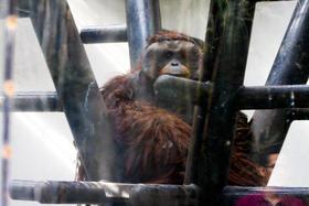 Chapultepec: Cárcel de animales