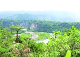 Biólogos temen apocalipsis amazónico por la depredación