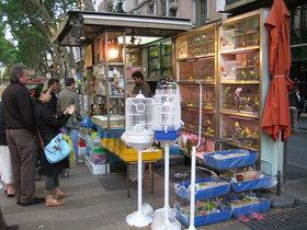 Uno de los quioscos de animales en La Rambla de Barcelona