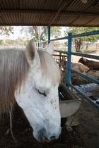 La burocracia abandona a los caballos de la alcaldía de Maracaibo