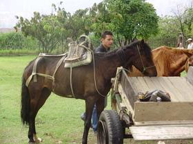 Pereira: Segunda Ciudad de Colombia que remplazará Caballos por Motocarros!