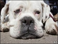Grecia, el país que más abusa de animales