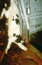 ¡Apoya la petición de HSI para reformar leyes de  protección animal en México!