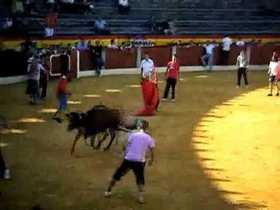 Junta de Andalucía abre expediente por muerte de  vaquillas en Alhaurín