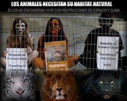 Acompáñanos en Barquisimeto contra los circos con animales