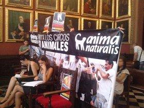 ¡Palma de Mallorca prohibe los circos con animales salvajes!