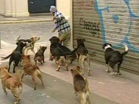 En Chile ya no se multará por alimentar a perros abandonados en Valparaíso