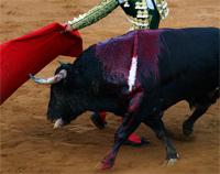 Vota a favor de la prohibición de las corridas de toros en Valencia (España)