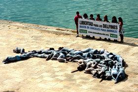 AnimaNaturalis lanza en Mallorca su nueva campaña por el cierre de delfinarios