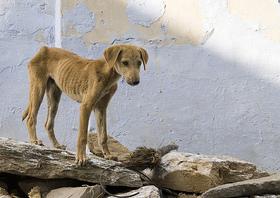 Parlamento chileno a punto de autorizar el sacrificio de animales abandonados