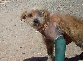 Maltratar a un animal, sin necesidad de ser ensañamiento, es ya delito en España