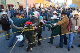 ¡Envía esta carta para detener tortura y matanza de bueyes en Querétaro!