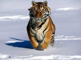 ¡Prohíbidos los espectáculos con animales en circos y zoológicos en China!