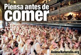 AnimaNaturalis Mallorca cancela acto informativo de veganismo