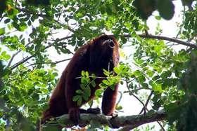 Fiscalía de Venezuela solicita medidas de protección para la fauna silvestre
