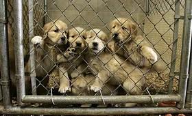 Los Ángeles (EE.UU) prohibe la compra-venta de animales