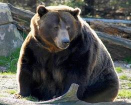 """El gobierno de Ucrania liberará a los """"osos bebedores"""""""