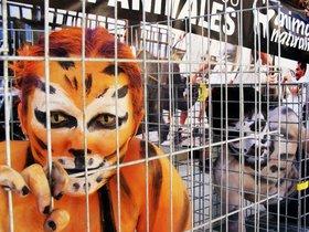 Activistas piden en S´Arenal la abolición de los circos con animales